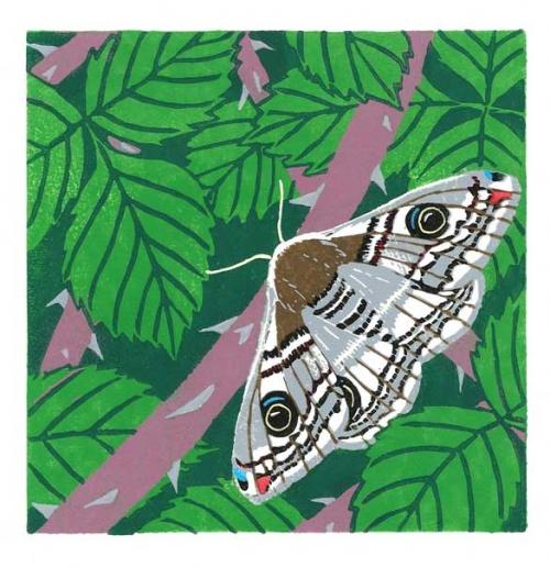 Bartlett-Vanna-Emperor-Moth.jpg