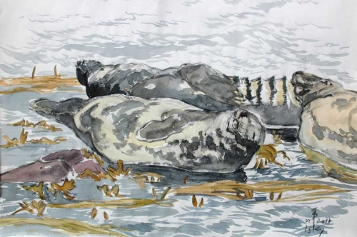Boensch-Stefan-Relaxing-Seal.jpg