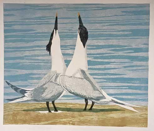 Hooper-Lisa-Sandwich-Terns.jpg