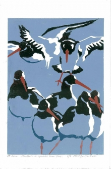 Brodde-Martin-Oystercatchers at high tide roose.jpg