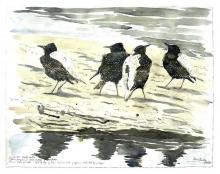 Brodde-Martin-Starlings on the mud flat, Fano, the Wadden Sea.jpg