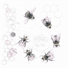 Crispin-Louisa-Study of a Bumble Bee 007.jpg