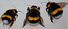 Dowler-Niggy-The 3 Bees.jpg