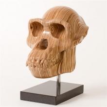 Prickett-Bill-Chimp skull.jpg