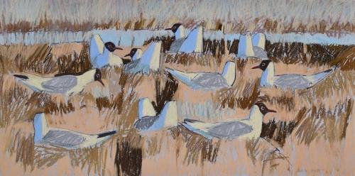 Scott-Dafila-Black-Headed-Gull-Colony.jpg