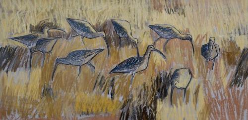 Scott-Dafila-Curlews,-North-Norfolk.jpg