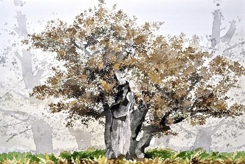 Sidaway-Ian-The-Autumn-Oak.jpg
