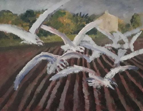 Sorrell-Richard-Gulls-Flying-Over-A-Field.jpg