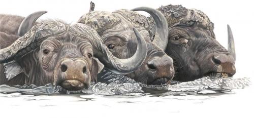 Steel-Tamsin-Buffalo-Brothers.jpg