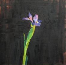 Japanese Iris, Oil on linen, 40x40cm.jpeg