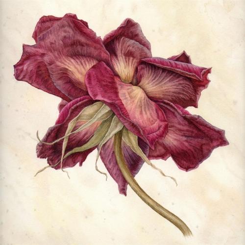 Trickey-Julia-The-Last-Rose.jpg