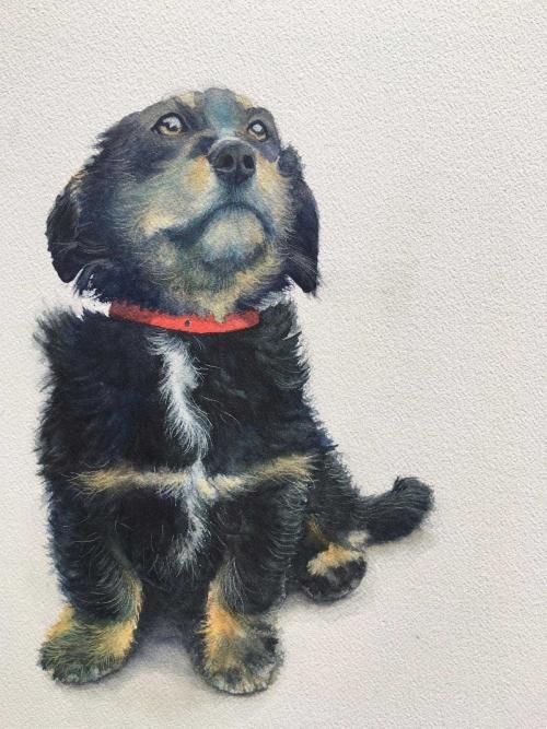 Trobe-Kirstie-Puppy-With-Red-Collar.jpg