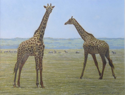 Turvey-Simon-Giraffes-at-Amboseli.jpg