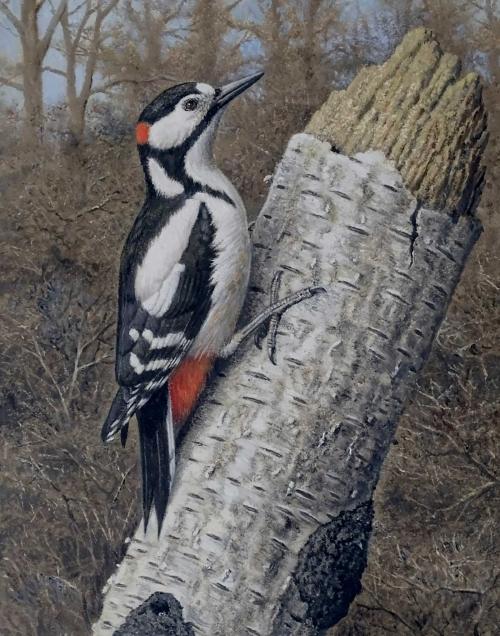 Turvey-Simon-Great-Spotted-Woodpecker.jpg