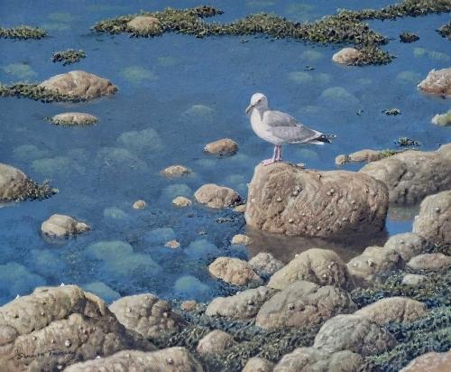 Turvey-Simon-Gull-On-The-Shore.jpg