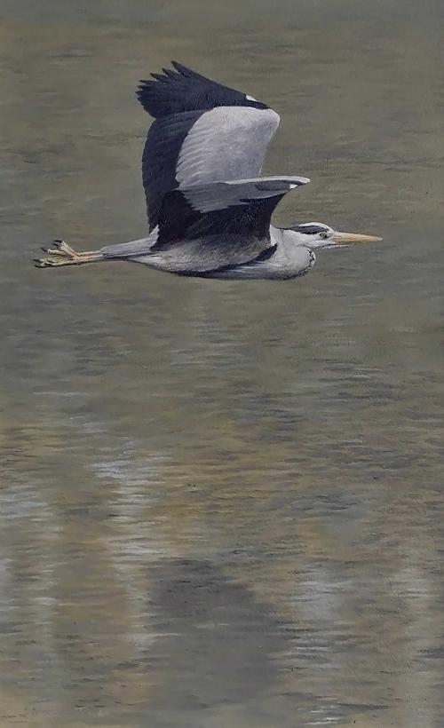 Turvey-Simon-Heron.jpg