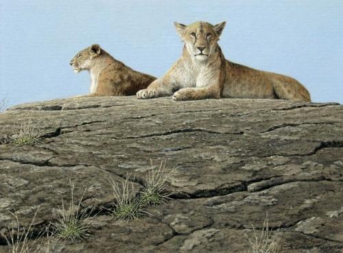Turvey-Simon-Lions-Masai-Mara.jpg