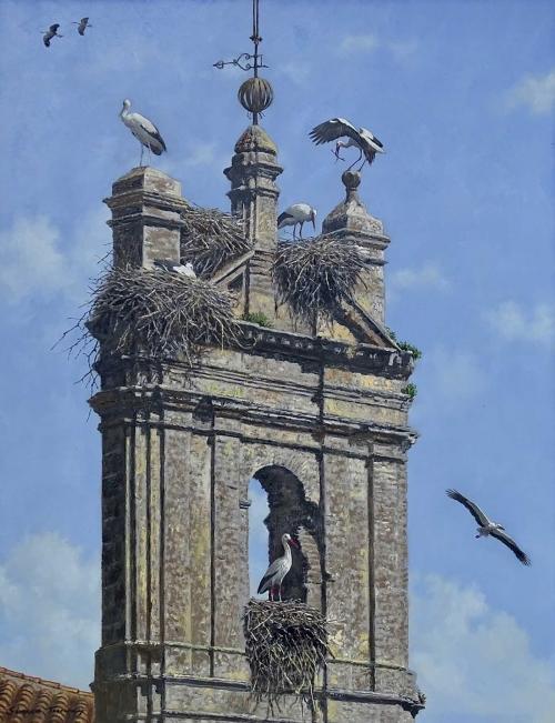 Turvey-Simon-White-Storks,-Spain.jpg