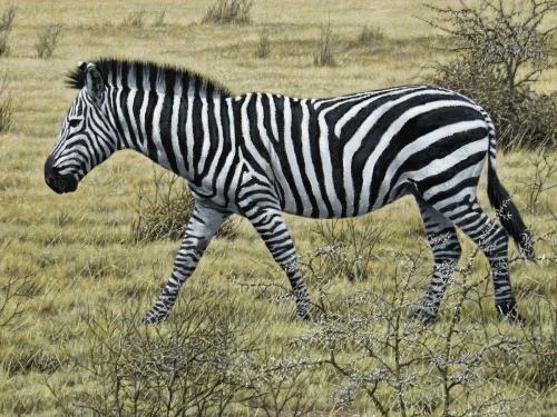 Turvey-Simon-Zebra.jpg