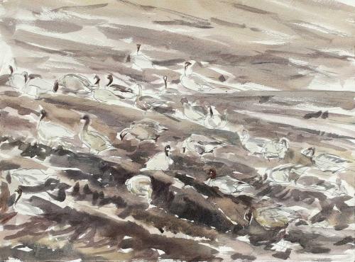 Wallbank-Chris-Pink-Footed-Geese,-9th-December.jpg