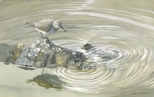 Gemma-Federico-Dunlin-and-Reflection.jpg