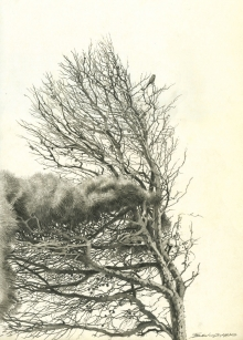 Gemma-Federico-Kestrel-on-Aleppo-Pine,-Giannutri-Island,-Tuscany.jpg