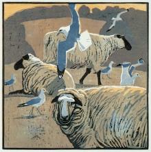 Greenhalf-Robert-Common-Gulls-&-Sheep.jpg