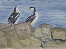 Rees-Darren-Antarctic-Shags,-North-Point,-Rothera.jpg