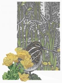 Sinden-Chris-Marigold snipe.jpg
