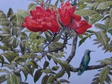 Turvey-Simon-Green-Violetear-Hummingbird---Colombia.jpg