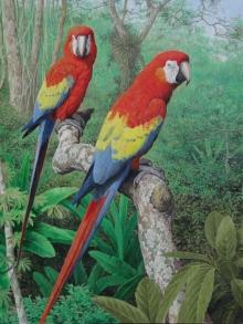 Turvey-Simon-Scarlet-Macaws----Amazon.jpg