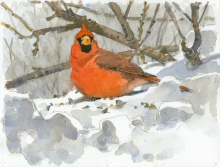 Van Dusen-Barry-Northern Cardinal.jpg