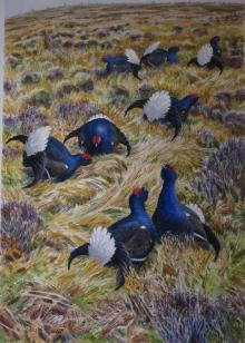Warren-Michael-Black-Grouse'-watercolour-85x60-cm.jpg