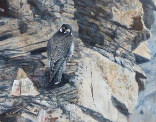 Proud-Alastair-The-grey-falcon.jpg