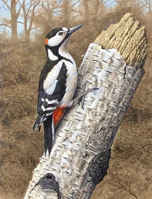 Turvey-Simon-Great-Spotted-Woodpecker.jpg