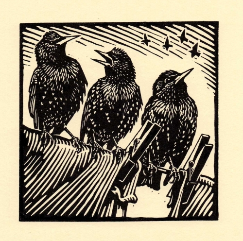 Richard Allen Starlings