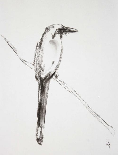 Geffré-Lucie-Bird.jpg