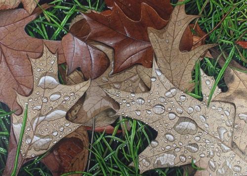 Wood-Sarah-Quercus-Oak-Leaves.jpg