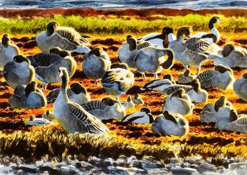 Woodhams-Ben-Backlit-Greylags-And-Ducks.jpg