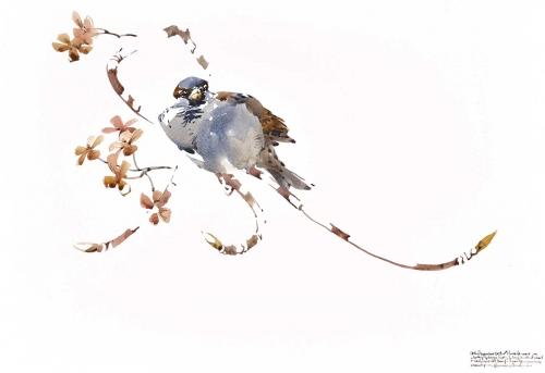 Woodhead-Darren-Chill-Time---Resting-Male-House-Sparrow.jpg