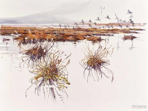 Woodhead-Darren-Curlew-Arrival-Over-Flooded-Saltmarsh.jpg