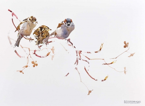 Woodhead-Darren-House-Sparrow-Trio-On-Hydrangea-Twists.jpg