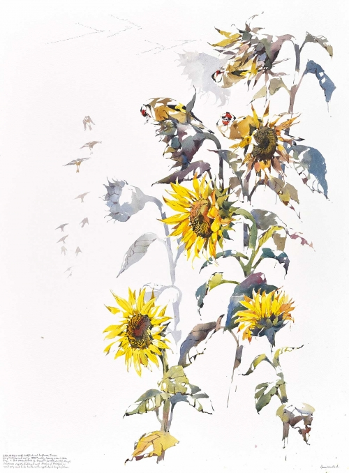 Woodhead-Darren-Sunflowers,-Goldfinch-And-Arriving-Pinkfeet-Autumn.jpg