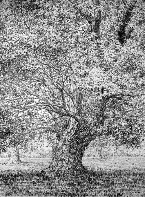 Wright-Roy-Beneath-the-Summer-Oak.jpg