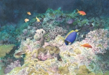 Borello-Wendy-Bassas da India marine life.jpg