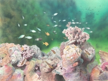 Borello-Wendy-Coral Head Bassas da India.jpg