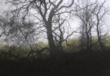 Brammeld-David-Woodland-Walk.jpg
