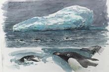 Bruce Pearson Adelie Penguins.jpg