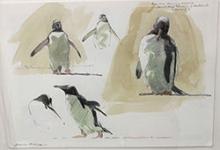 Bruce Pearson Genttoo Penguins, Falkland Islands.jpg