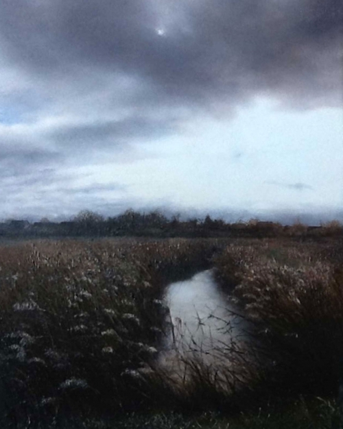 Coleman-Melanie-Marsh-Reeds-at-Dusk.jpg